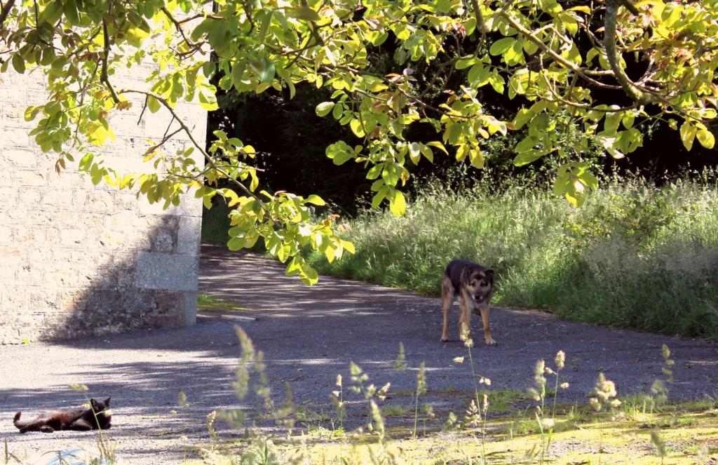 ENEE - mâle croisé Berger Allemand de taille grande, né environ août 2008 (PASCANI) - En FALD chez LiliDG (14) - Page 39 Img_0313