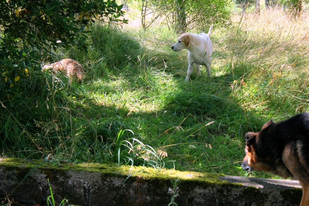 ENEE - mâle croisé Berger Allemand de taille grande, né environ août 2008 (PASCANI) - En FALD chez LiliDG (14) - Page 2 Img_0622