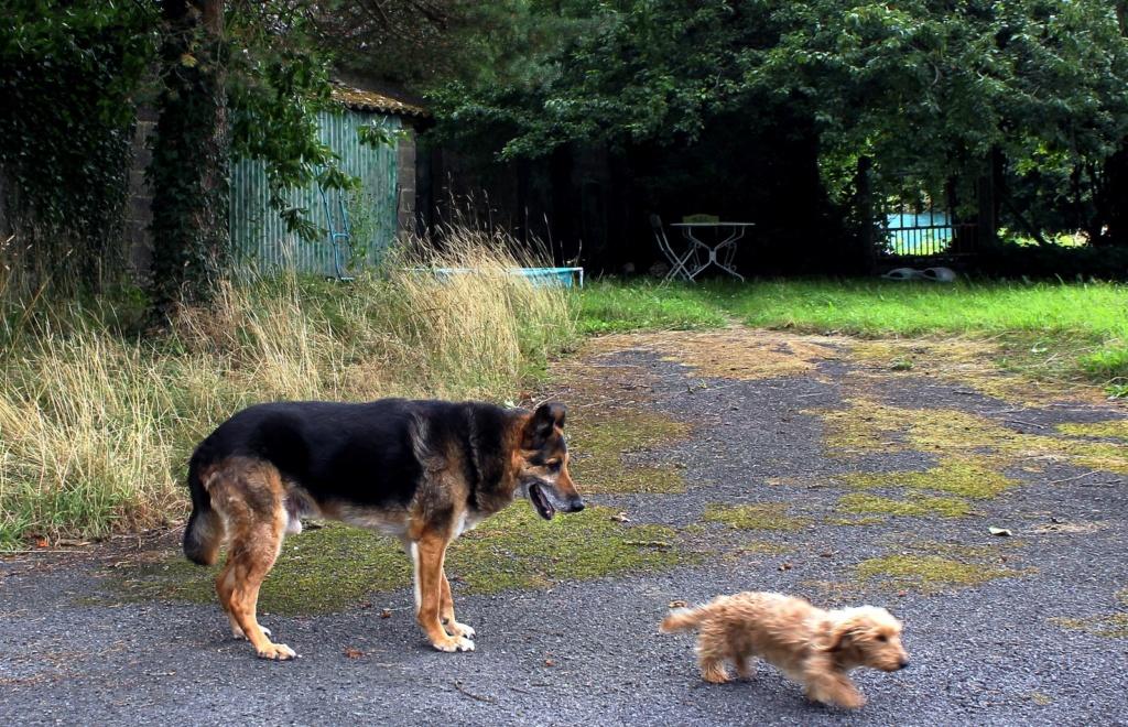 ENEE - mâle croisé Berger Allemand de taille grande, né environ août 2008 (PASCANI) - En FALD chez LiliDG (14) - Page 42 Img_0628