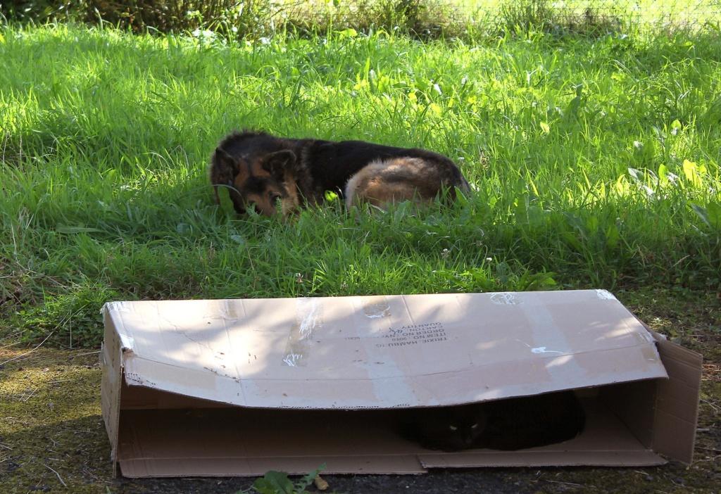 ENEE - mâle croisé Berger Allemand de taille grande, né environ août 2008 (PASCANI) - En FALD chez LiliDG (14) - Page 42 Img_0711
