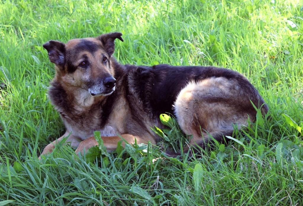 ENEE - mâle croisé Berger Allemand de taille grande, né environ août 2008 (PASCANI) - En FALD chez LiliDG (14) - Page 42 Img_0712