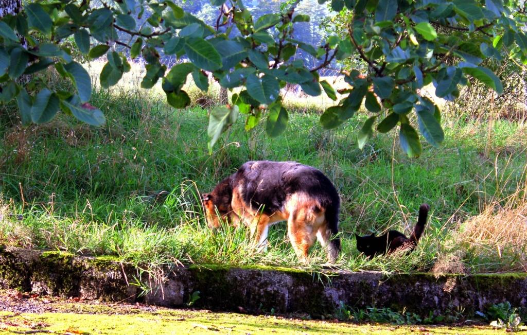 ENEE - mâle croisé Berger Allemand de taille grande, né environ août 2008 (PASCANI) - En FALD chez LiliDG (14) - Page 42 Img_0713