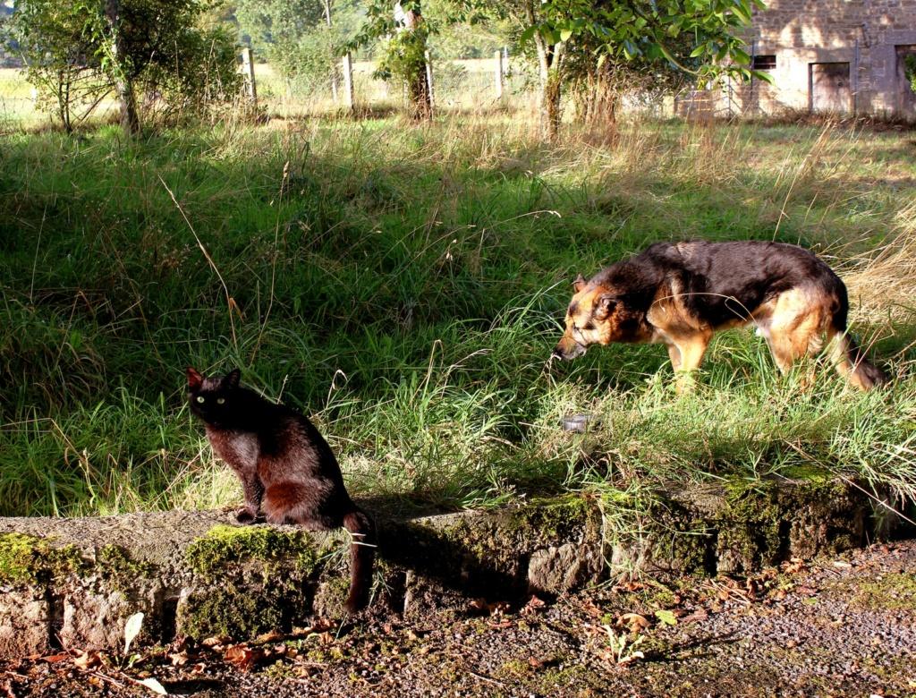 ENEE - mâle croisé Berger Allemand de taille grande, né environ août 2008 (PASCANI) - En FALD chez LiliDG (14) - Page 42 Img_0715