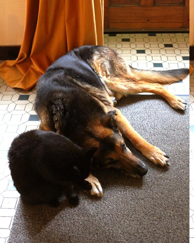 ENEE - mâle croisé Berger Allemand de taille grande, né environ août 2008 (PASCANI) - En FALD chez LiliDG (14) - Page 43 Img_0729