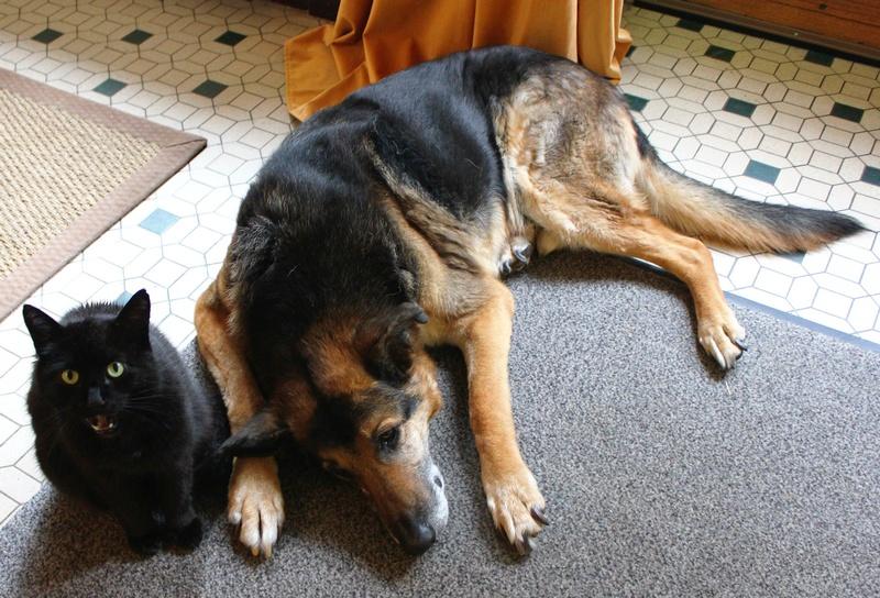 ENEE - mâle croisé Berger Allemand de taille grande, né environ août 2008 (PASCANI) - En FALD chez LiliDG (14) - Page 43 Img_0731