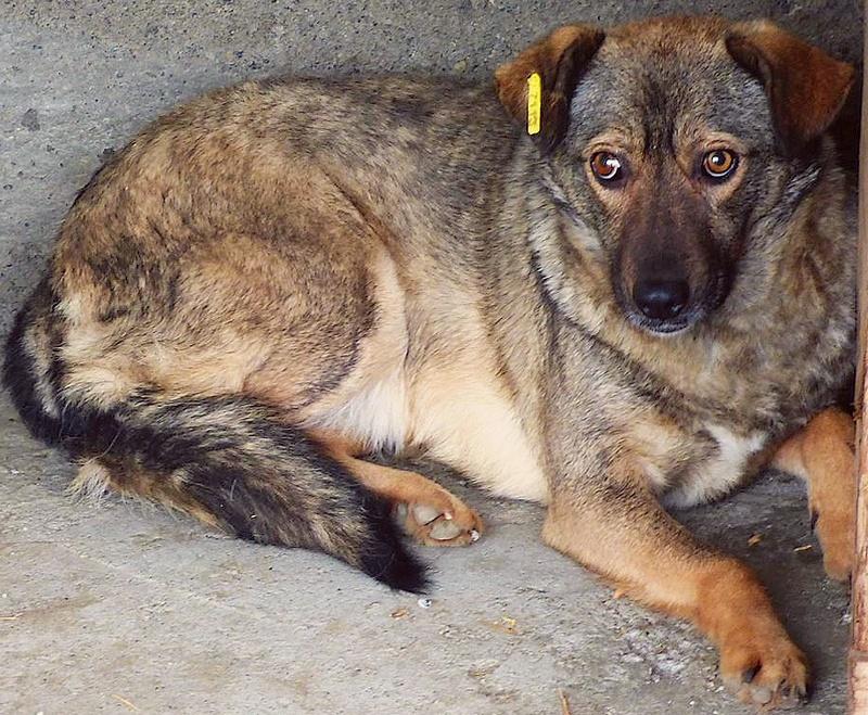 H E L P !  + de 4 ans et 10 mois et jusqu'à 5 ans et demi de captivité, pour ces chiens sauvés de la fourrière-mouroir en décembre 2015 ! - Page 4 Janis_10