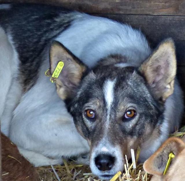 H E L P !  + de 4 ans et 10 mois et jusqu'à 5 ans et demi de captivité, pour ces chiens sauvés de la fourrière-mouroir en décembre 2015 ! - Page 4 Jooki10