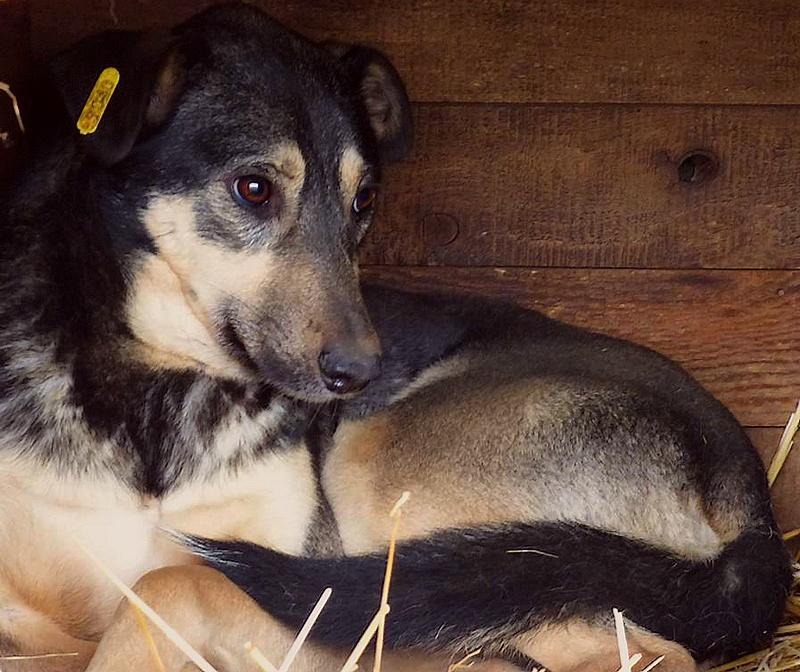 H E L P !  + de 4 ans et 10 mois et jusqu'à 5 ans et demi de captivité, pour ces chiens sauvés de la fourrière-mouroir en décembre 2015 ! - Page 4 Krispy10