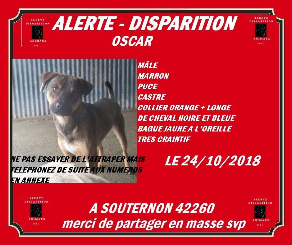 OSCAR - mâle, né environ avril 2012, taille moyenne - En FA chez DarkKing (42) replacé en FA chez Sylvie (02)  - Page 7 Oscar10