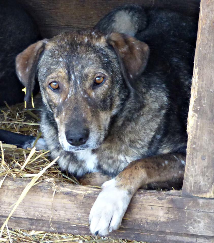 H E L P !  + de 4 ans et 10 mois et jusqu'à 5 ans et demi de captivité, pour ces chiens sauvés de la fourrière-mouroir en décembre 2015 ! - Page 4 Patz10