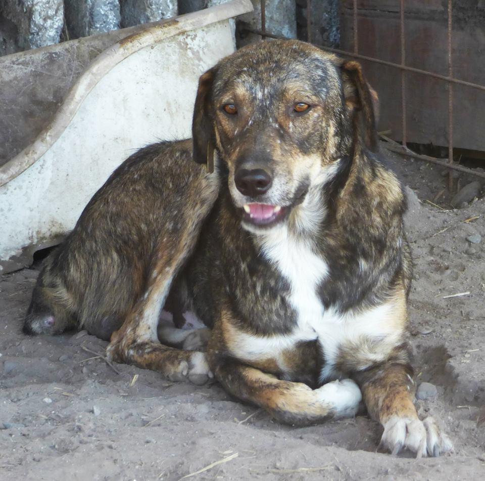 H E L P !  + de 5 ans et jusqu'à près de 6 ans de captivité, pour ces 4 chiens sauvés de la fourrière-mouroir en décembre 2015 ! - Page 5 Patz11