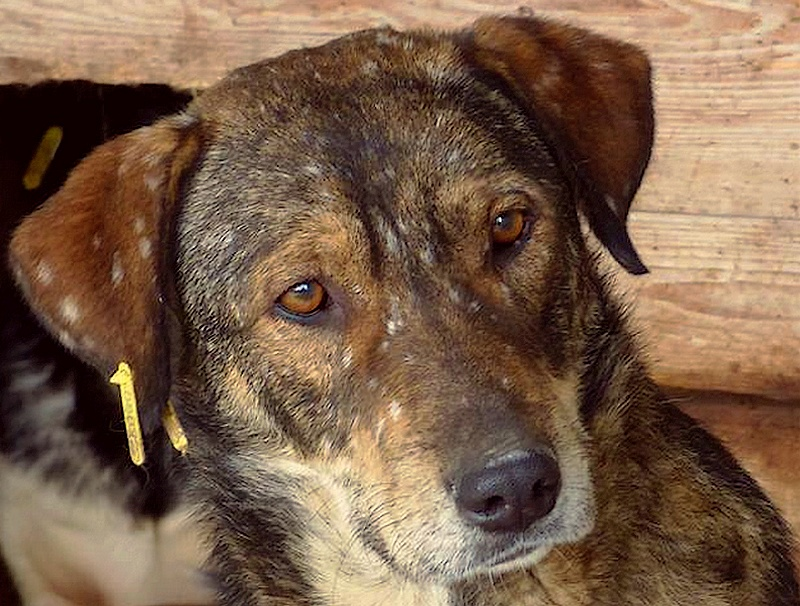 H E L P !  + de 4 ans et 10 mois et jusqu'à 5 ans et demi de captivité, pour ces chiens sauvés de la fourrière-mouroir en décembre 2015 ! - Page 4 Patz_d10
