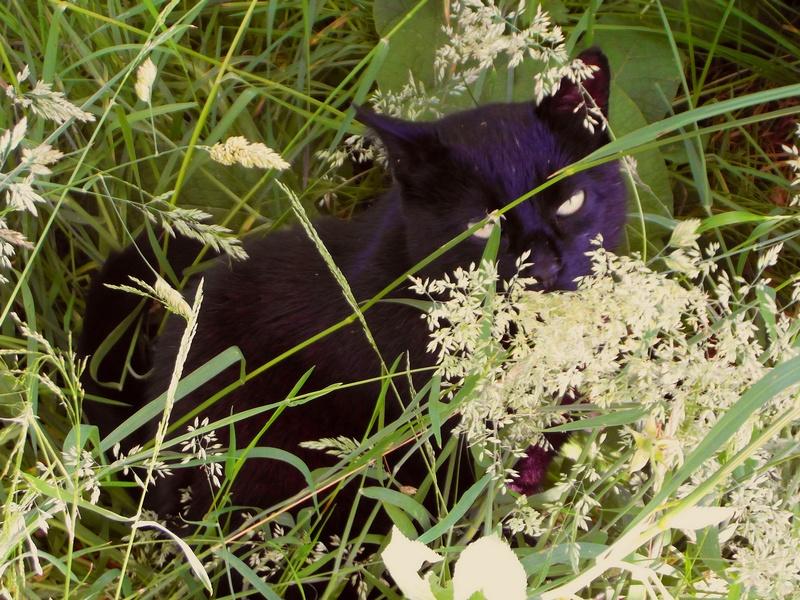 ENEE - mâle croisé Berger Allemand de taille grande, né environ août 2008 (PASCANI) - En FALD chez LiliDG (14) - Page 10 Sam_0032