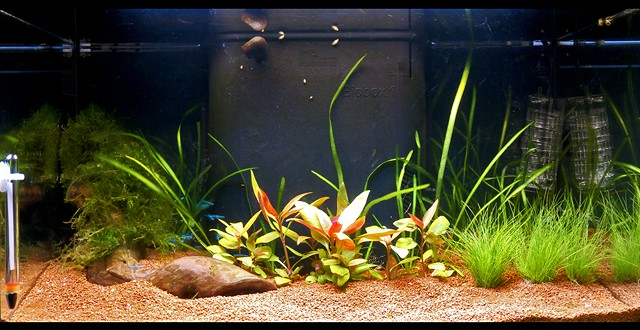 [The Green Tank - 50l ]  =>Layout Finished p.26<= - Page 6 Forum112
