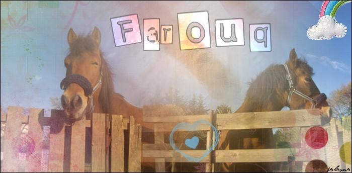 Le pré de Farouq Signa10