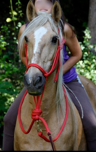 Equitation - Page 3 Kyaraa11