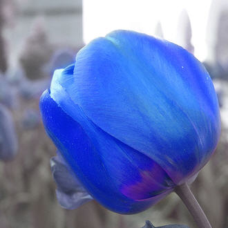 Fotos de ramos Bluetu10