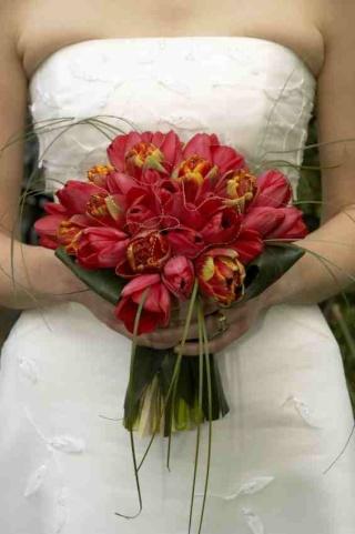 Fotos de ramos Tulipa10
