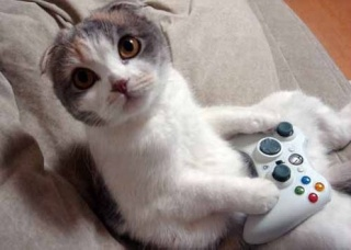 Xbox 360 продаётся на 20% быстрее, чем Xbox 1 Cat10