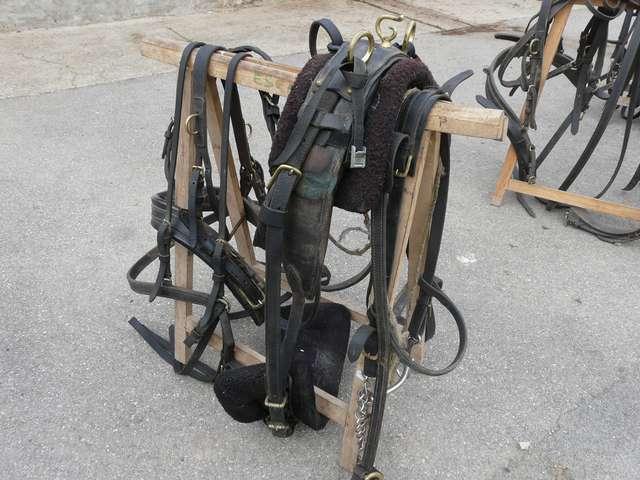 harnais pour mulet - Page 2 P1010410