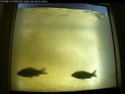 Passe à poisson du marais pin - Page 4 C10