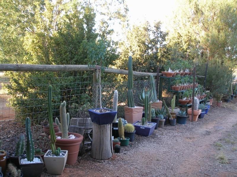 Show us  your cacti Cactus11