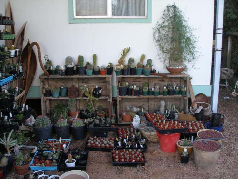 Show us  your cacti Cactus12