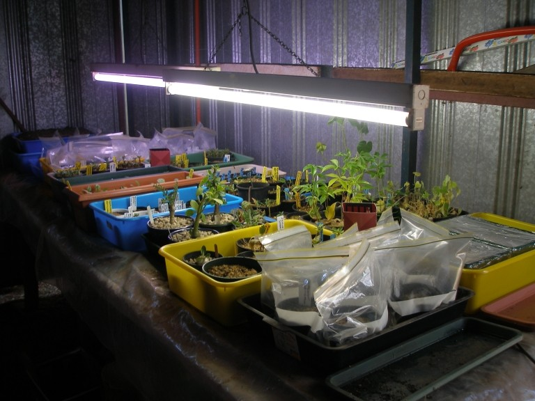 Heated grow trays. Heat_m10