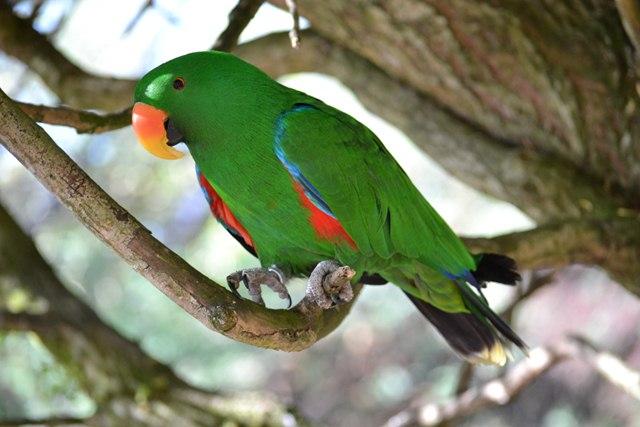 18 - Concours les oiseaux ..... oct 2011 Dsc_0313