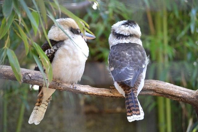 18 - Concours les oiseaux ..... oct 2011 Dsc_0314