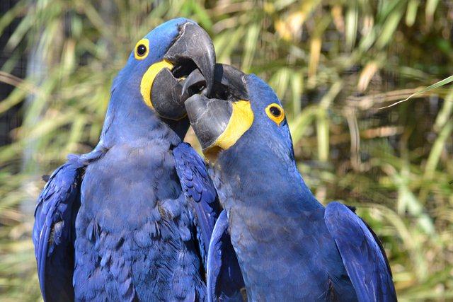 18 - Concours les oiseaux ..... oct 2011 Dsc_0315