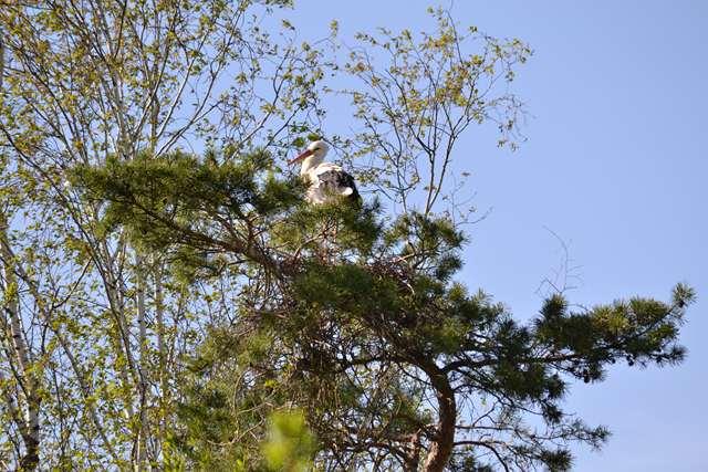 18 - Concours les oiseaux ..... oct 2011 Dsc_0413