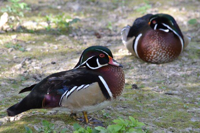 18 - Concours les oiseaux ..... oct 2011 Dsc_0414