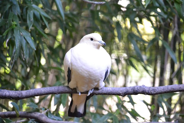 18 - Concours les oiseaux ..... oct 2011 Dsc_0416