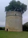 Le 15 juin à Verdun Pigeon10
