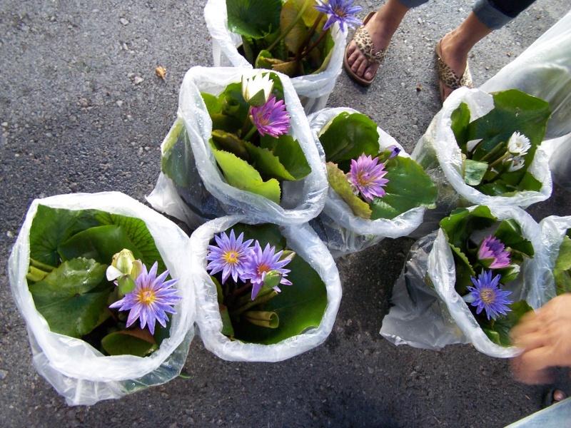 Petite visite au marché de Chatuchak, Bangkok 2_1010
