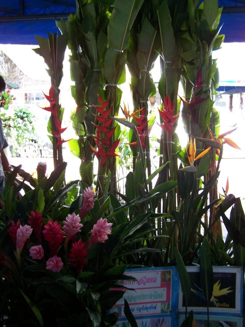 Petite visite au marché de Chatuchak, Bangkok 2_1110