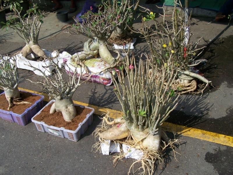 Petite visite au marché de Chatuchak, Bangkok 2_1410
