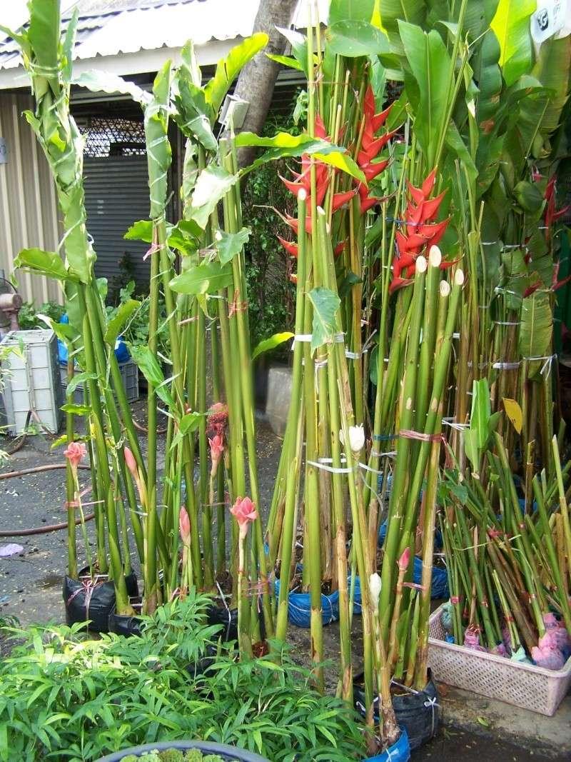 Petite visite au marché de Chatuchak, Bangkok 2_2010