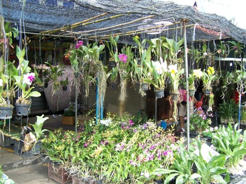 Petite visite au marché de Chatuchak, Bangkok 2_2110