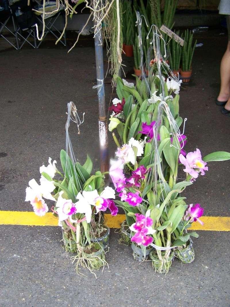 Petite visite au marché de Chatuchak, Bangkok 2_2210
