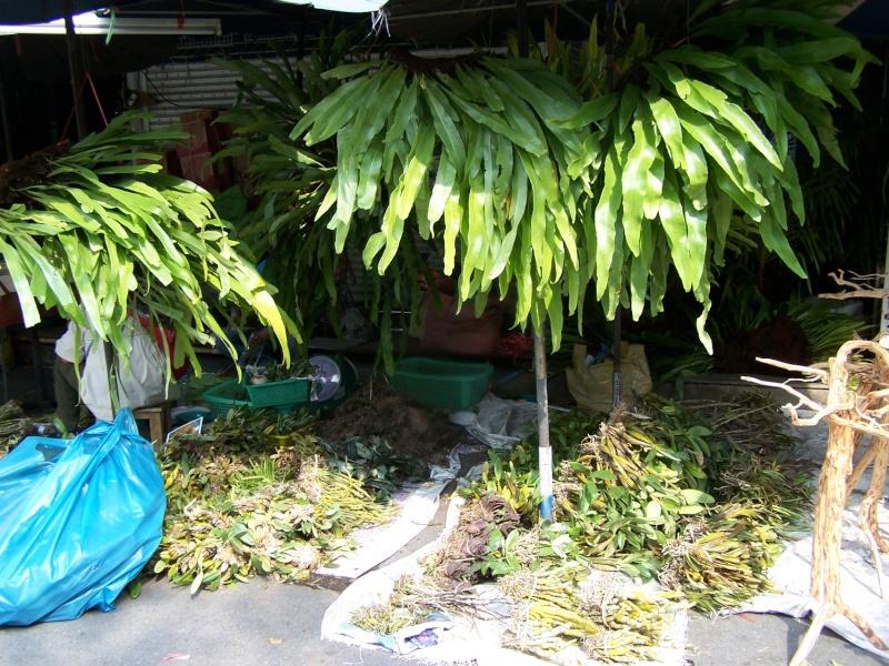 Petite visite au marché de Chatuchak, Bangkok 2_2310
