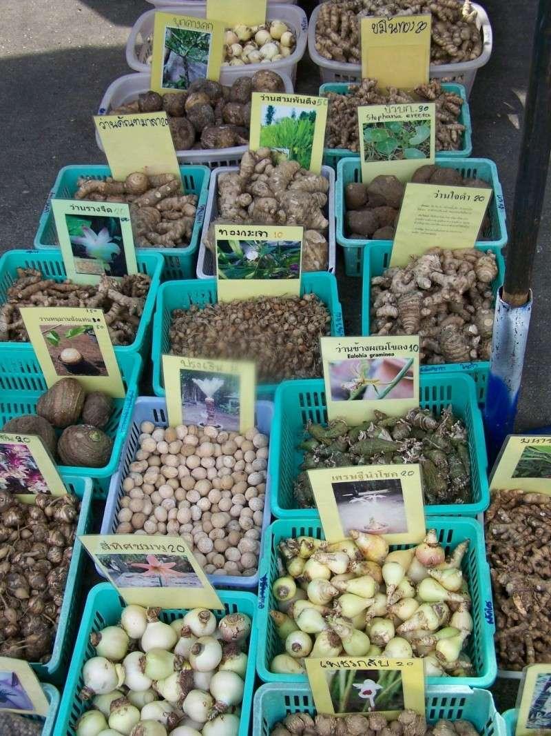 Petite visite au marché de Chatuchak, Bangkok 2_2410
