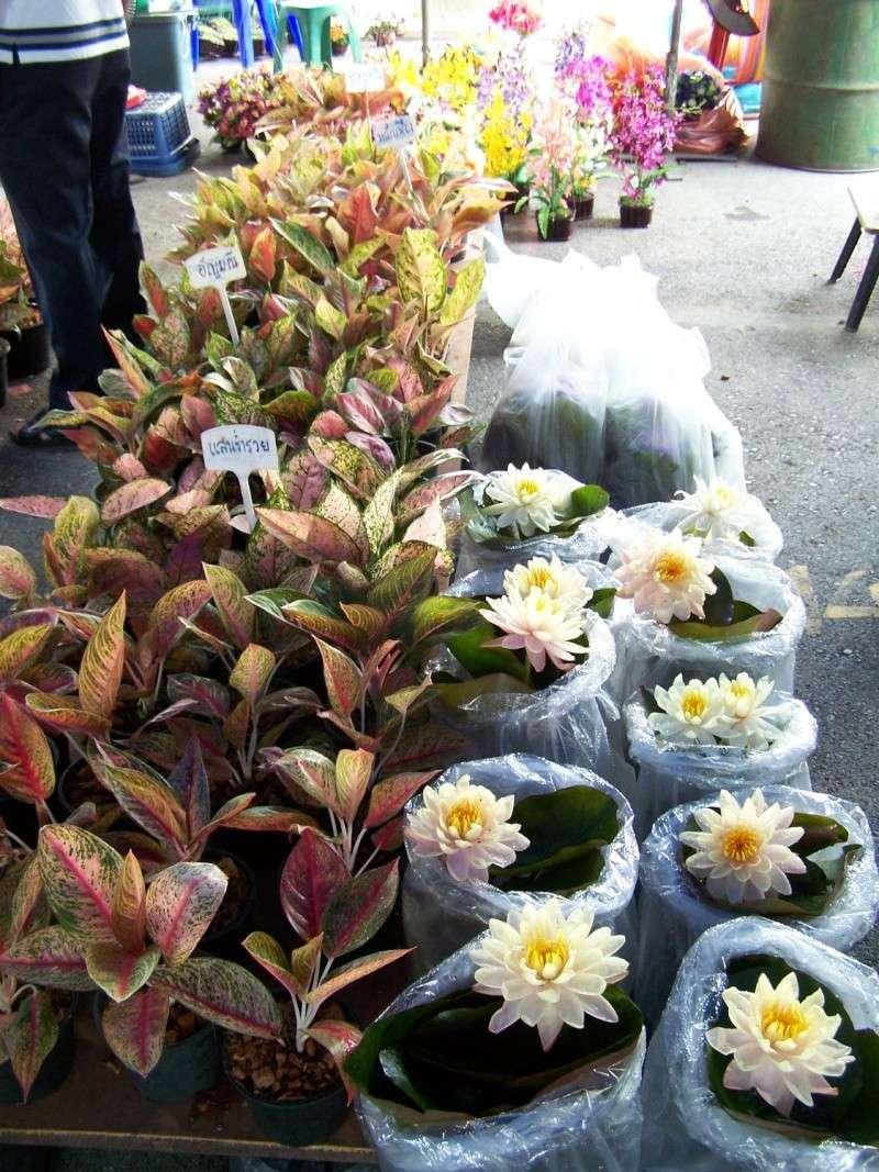 Petite visite au marché de Chatuchak, Bangkok 2_910
