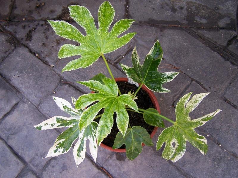 Foires aux plantes rares et de collection en Belgique Aaaqqq10