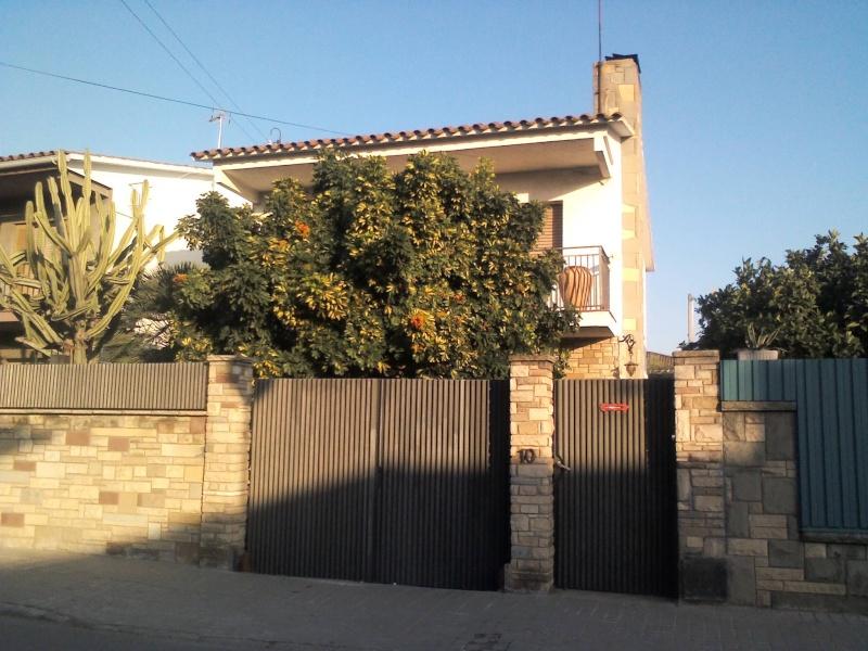 Schefflera arboricola Img43510