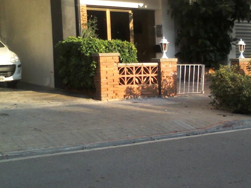 Schefflera arboricola Img43610