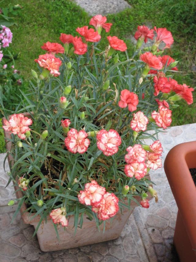 Julio en flor Img_0713