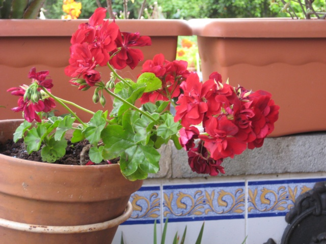 Julio en flor Img_0714