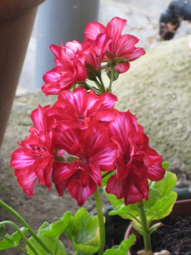 Julio en flor Img_0715